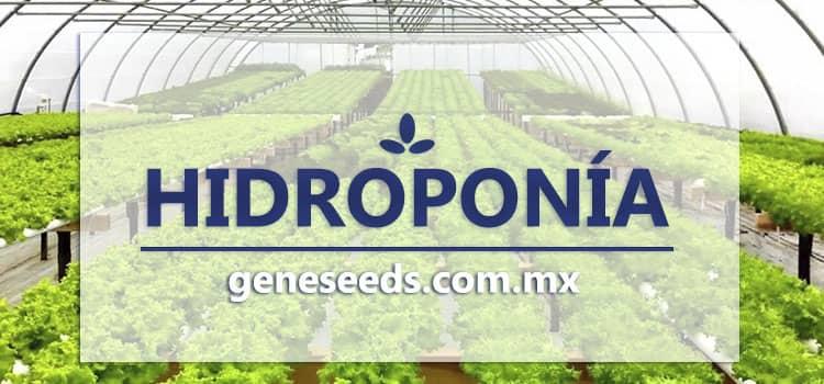 Hidroponia, semillas hibridas, semillas op, semillas para sembrar