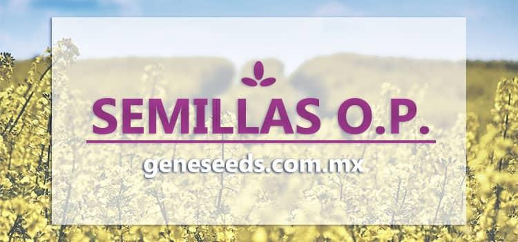 semillas, semillas op, semillas polinizacion abierta